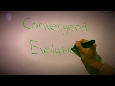 Ziya And Jade: Convergent Evolution