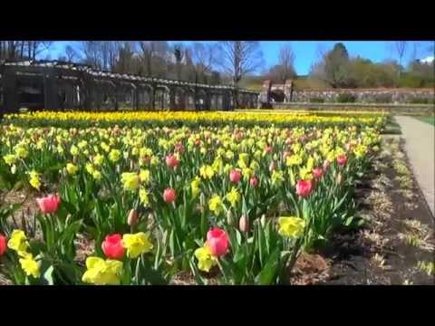 Biltmore Estate Spring Blooms