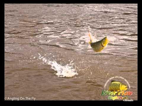 Dorado Fishing at Uruguay River tail water- Salto Grande ...