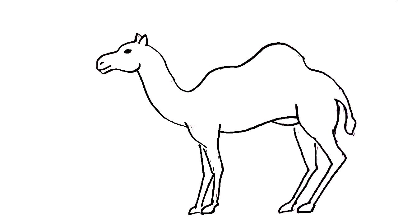 How To Draw A Camel In Easy Steps For Children Kids Beginners