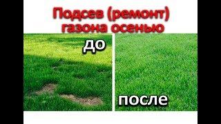 Подсев (ремонт) газона осенью.