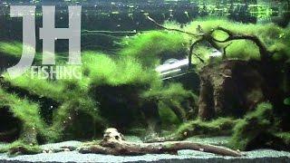 Aquariumeinrichtung im Zeitraffer