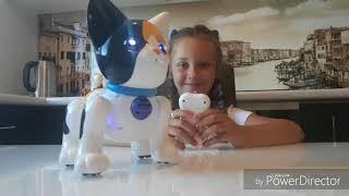 Интерактивная игрушка. Шустрик РобоКот. Видеообзор. Робот. Видео для детей