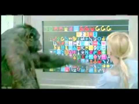 Savage-Rumbaugh et al.'s study of chimp language ...