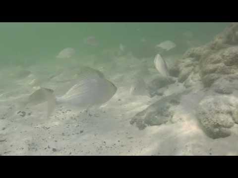 St Andrews Bay/Panama City Beach 08-06-2016