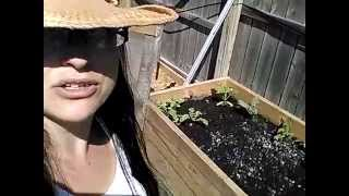 Cold frame toppers for my raised garden beds zone 5 gardening Michigan
