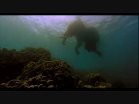 The Fall (2006) - Swimming Elephant Scene