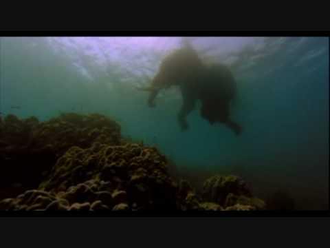 The Fall (2006) - Swimming Elephant Scene