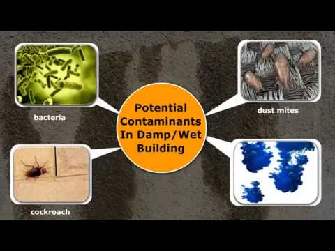 Health Effects That May Be Caused By Inhaling Mold Or Spores