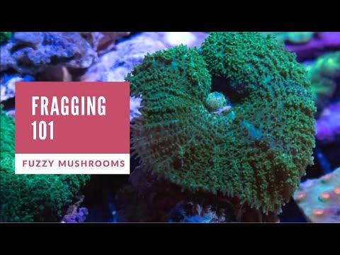 Fragging 101 | Fuzzy Mushrooms