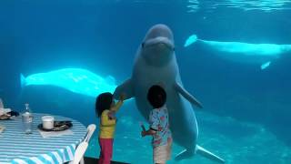 Beluga whales and 2 kids