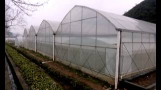 China Greenhouse
