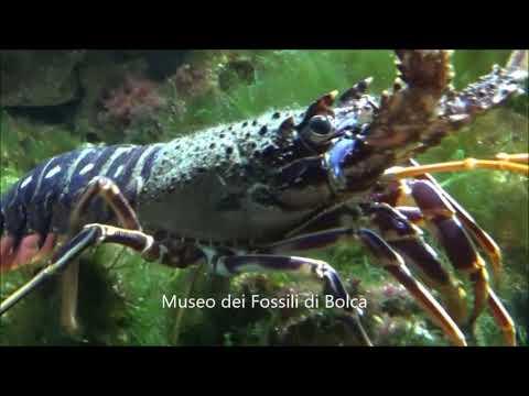 Museo dei fossili di Bolca, Vestenanova : rivivere un passato di oltre 50 milioni di anni fa