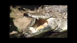 krokodyle w warszawskim zoo