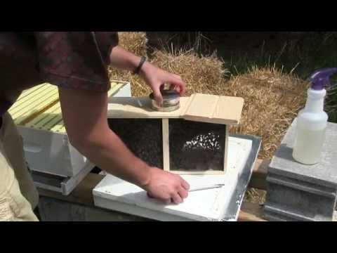 How to Install Packaged Honeybees Start to Finish