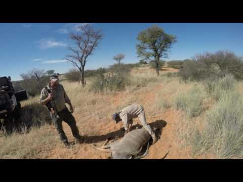 STS Kalahari Hunt 2017 4K