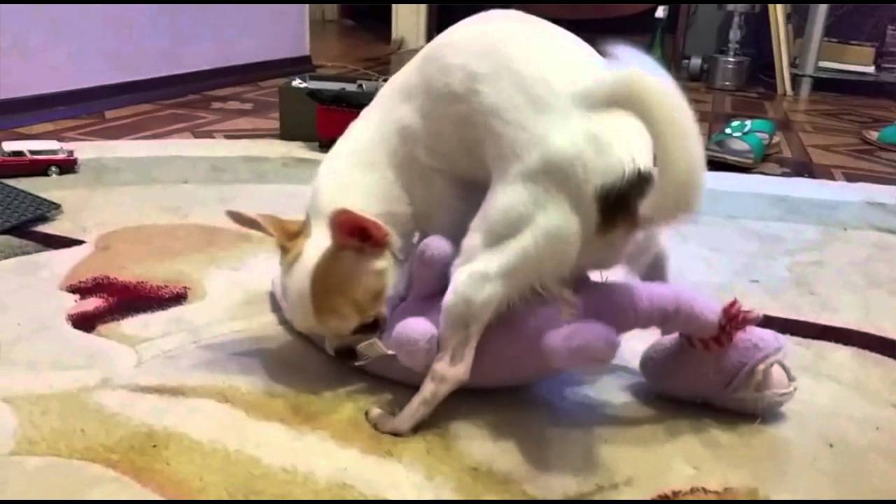 Секс девочка с сабаками
