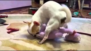 Собака и плюшевый дракон