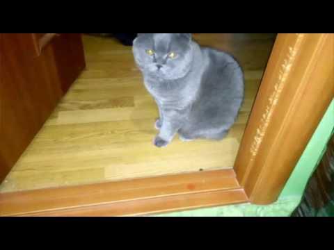 Как кормить кошку сухим кормом: 10 золотых правил