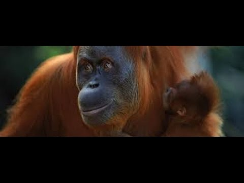 The Last Ape of Eden