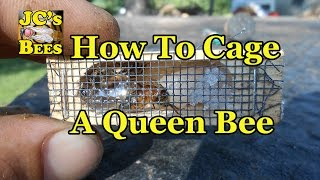 Caging A Queen Bee
