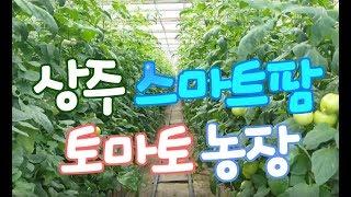 토마토 스마트팜 농장 체험영상