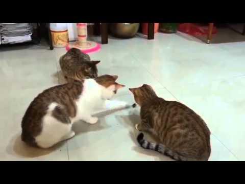 3 Cats Vs 1 Cockroach... Funny .  YouTube