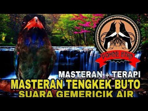 Masteran + Terapi !!! Suara Tengkek Buto + Suara Gemericik Air (Anti Stres)