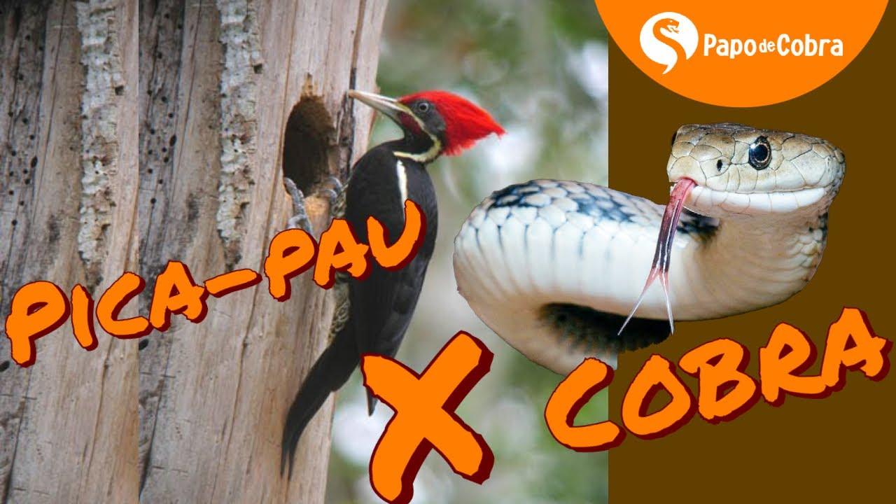 Cobra x Pica-pau | Papo de Cobra