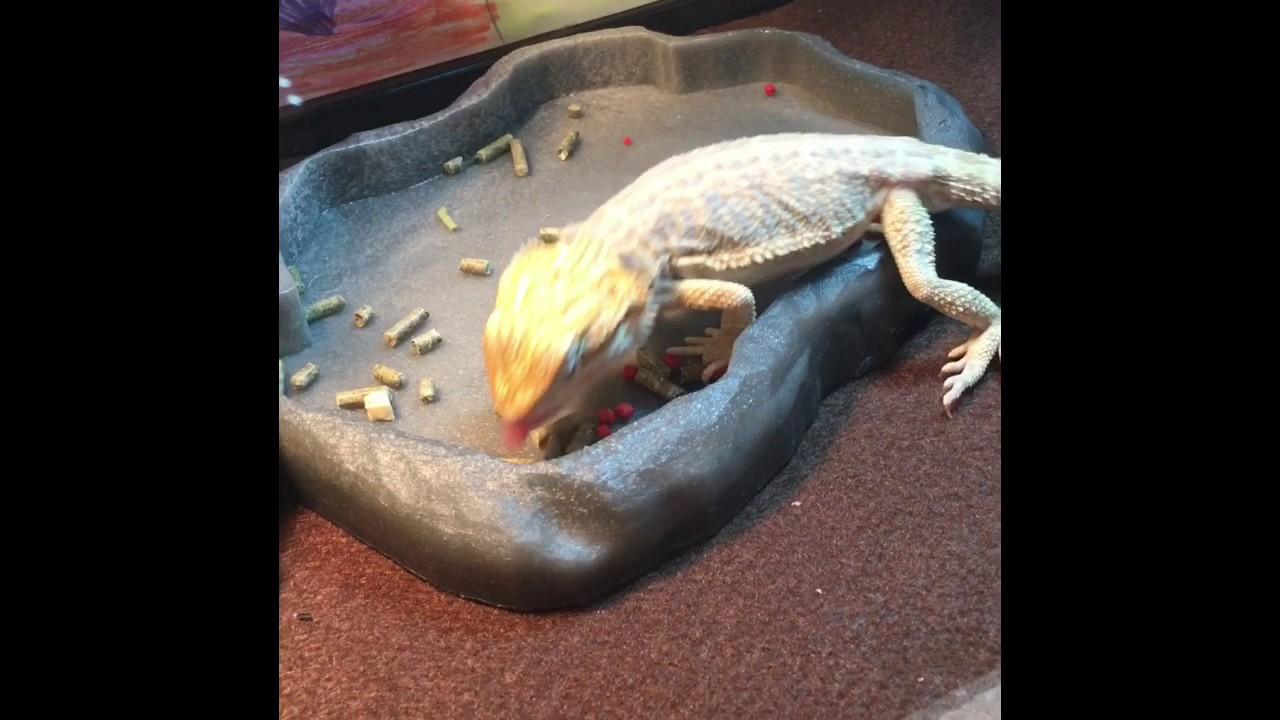 how to make a lizard