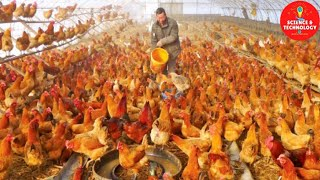 AMAZING MODERN HIGH-TECH CHICKEN FARM, MODERN TECHNOLOGY POULTRY EQUIPMENTS, TURNKEY AVIARY SYSTEMS