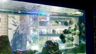 Big aquarium in Grandview Mall Guangzhou