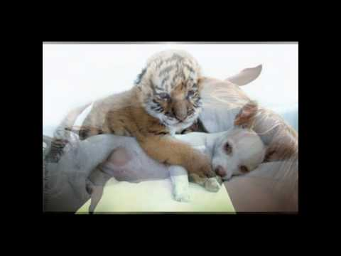 Valentine's Day: The Love of Animals - YouTube