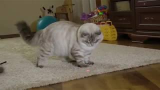 """невские маскарадные котята из питомника """"Neva Crystal"""""""