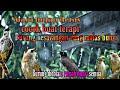 Suara Hujan Deras Untuk Terapi Burung Trucukan Tersayang Auto Gacor  Mp3 - Mp4 Download