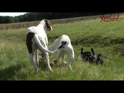 Hunderassen aufgez hlt welche hunderasse passt zu mir for Welche farbe passt zu beige