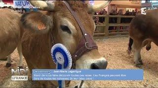ANIMAUX : Les vaches Parthenaises défilent sur le ring