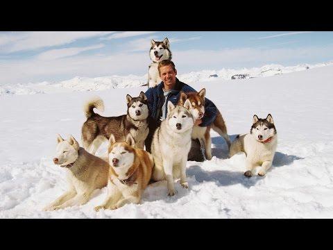 >>Фильмы про собак: комедии, драмы, фильмы о собаках для