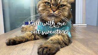 [knit with me] 뜨개로그, 고양이에게 귀여운…