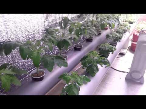 видео: Гидропонная система