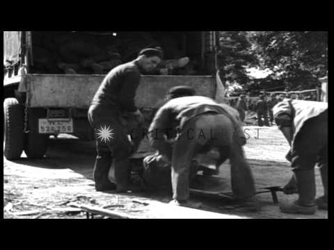 Dead bodies of German soldiers at a field in France several days after D-Day (D-D...HD Stock Footage