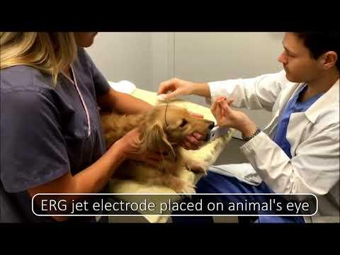 LKC Technologies - RETevet™ For Veterinary Ophthalmology