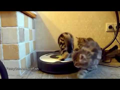 fanny videos cats fanny cats animal 2017
