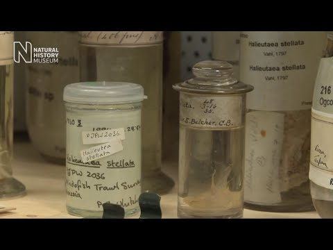 Pickle jars and precious specimens in the Spirit Collection | Natural History Museum
