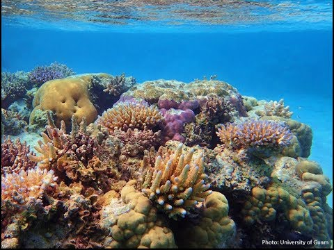 Texas' Own Coral Reefs (HSCT #111)