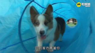 【香港寵物節】毛毛學堂