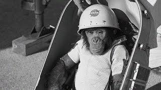 ¿Qué Pasó con Ham el Chimpancé en el Espacio?