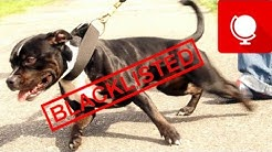 10 Dogs Most Often Blacklisted by Insurers