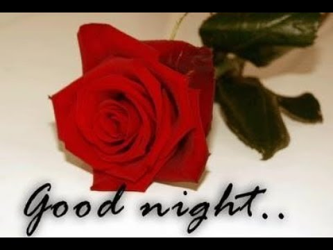 Good Night Red Rose Image Wishes369 Youtube