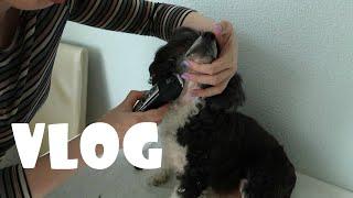 Подстригли собаку под ноль Стирка кроссовок в стиральной машине Как приготовить вкусные тефтели